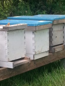 nucs in five-frame boxes